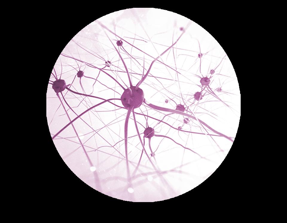 icono-neurocosmetica